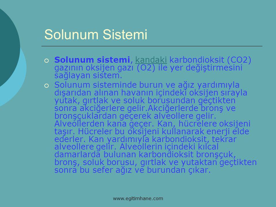 Solunum Sistemi Solunum sistemi, kandaki karbondioksit (CO2) gazının oksijen gazı (O2) ile yer değiştirmesini sağlayan sistem.