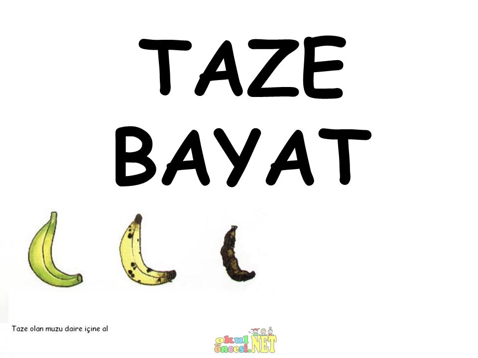 TAZE BAYAT
