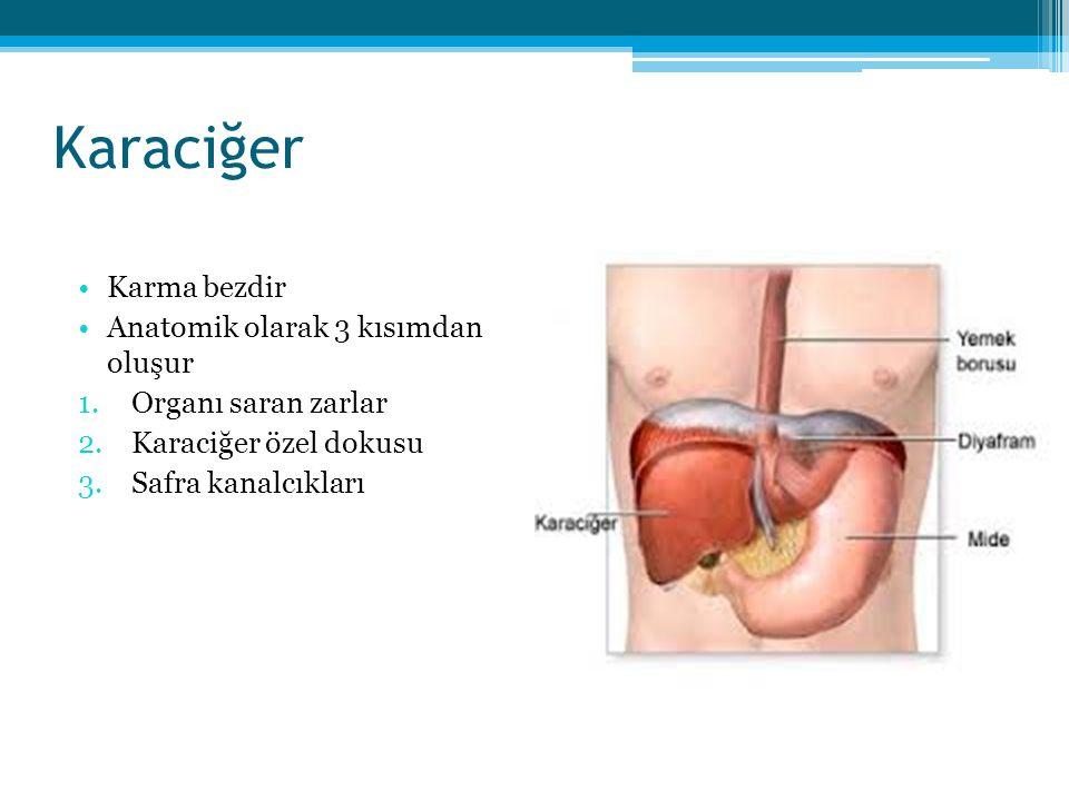 Karaciğer Karma bezdir Anatomik olarak 3 kısımdan oluşur