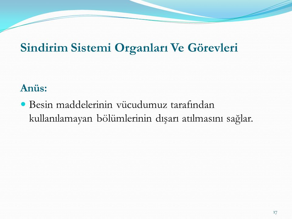 Sindirim Sistemi Organları Ve Görevleri
