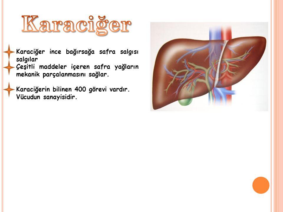 Karaciğer Karaciğer ince bağırsağa safra salgısı salgılar