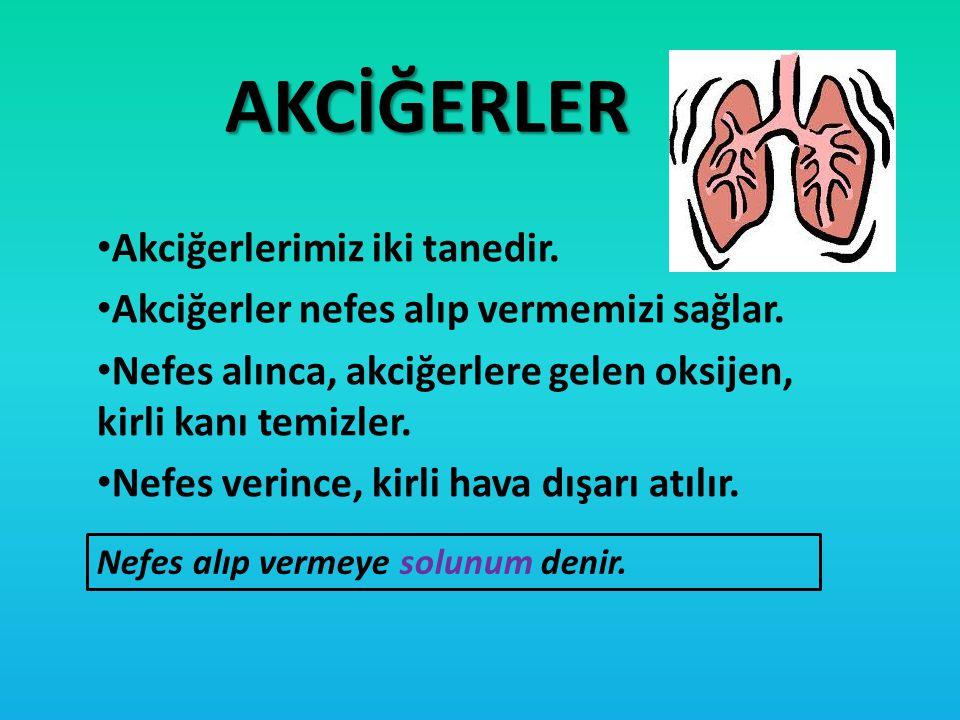 AKCİĞERLER Akciğerlerimiz iki tanedir.