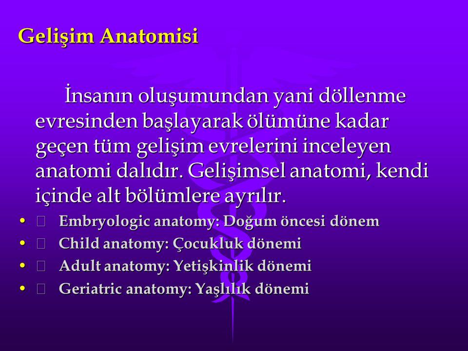Gelişim Anatomisi