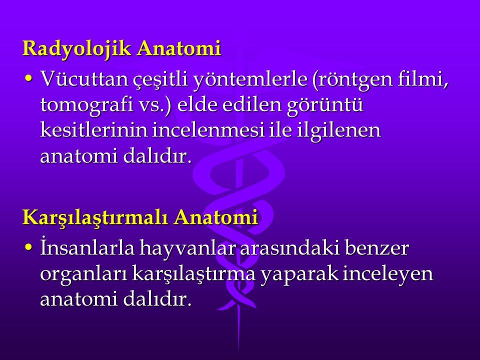 Radyolojik Anatomi