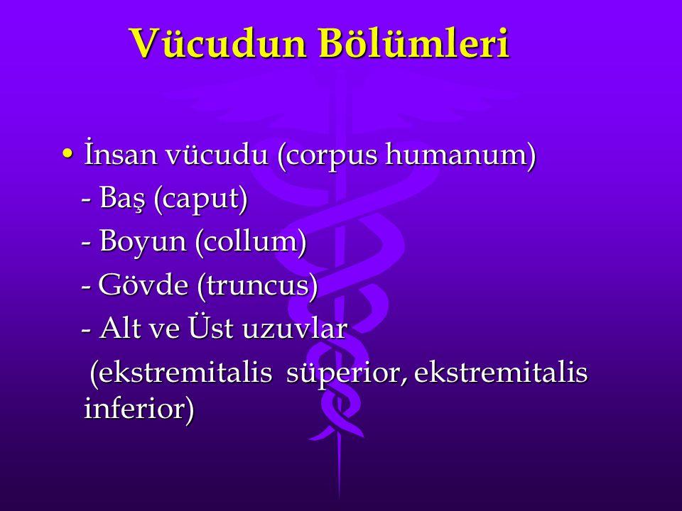 Vücudun Bölümleri İnsan vücudu (corpus humanum) - Baş (caput)