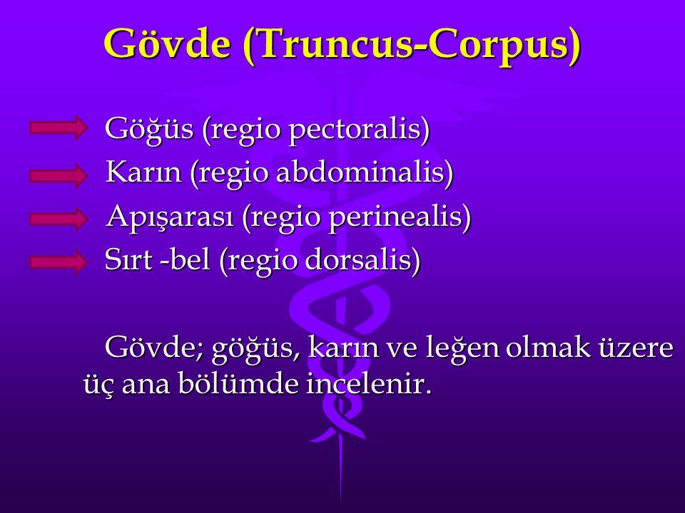 Gövde (Truncus-Corpus)