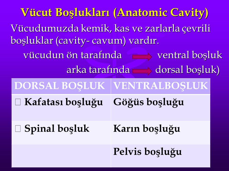 Vücut Boşlukları (Anatomic Cavity)