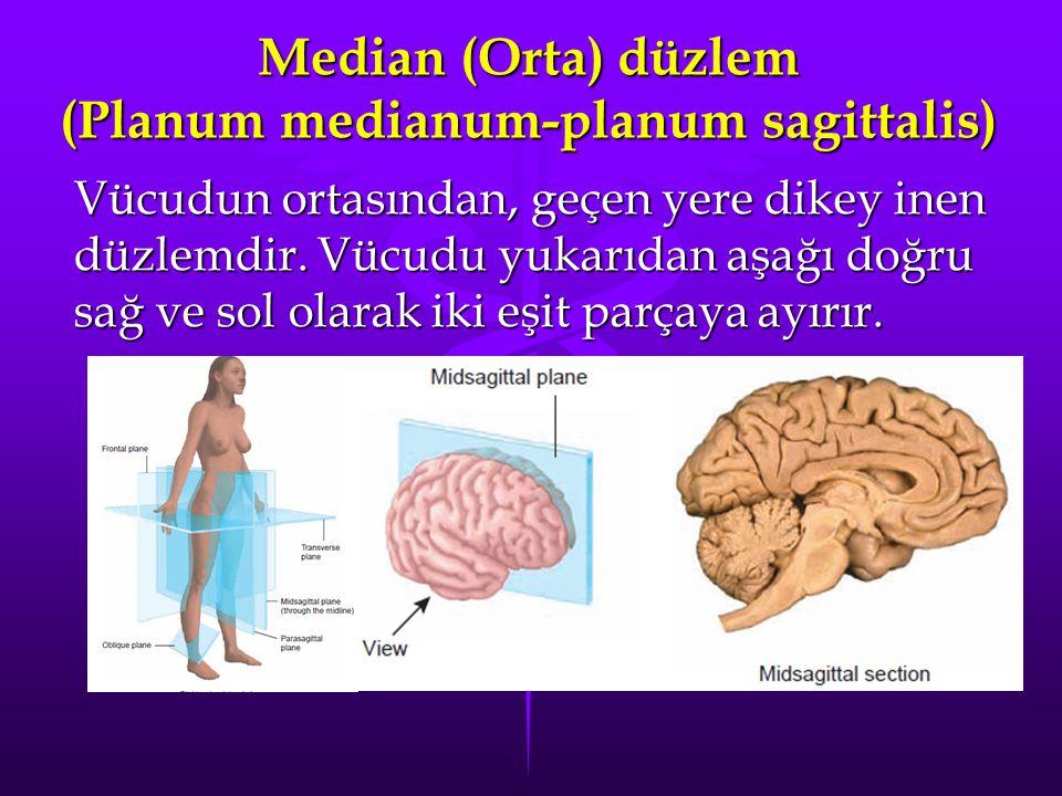 Median (Orta) düzlem (Planum medianum-planum sagittalis)