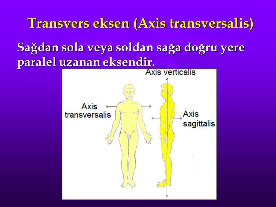 Transvers eksen (Axis transversalis)