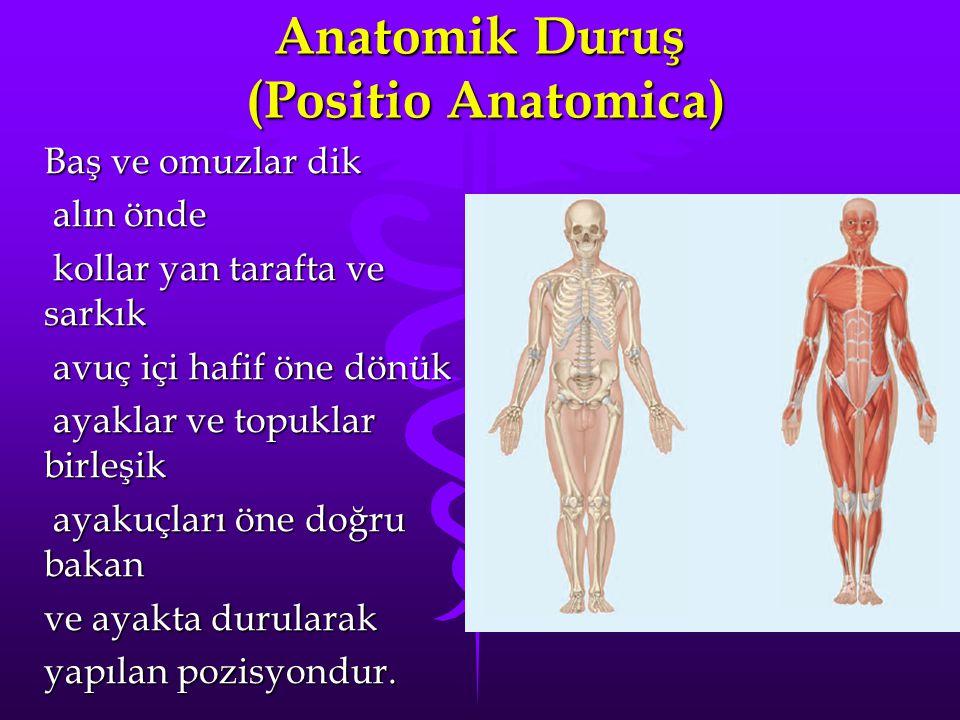 Anatomik Duruş (Positio Anatomica)