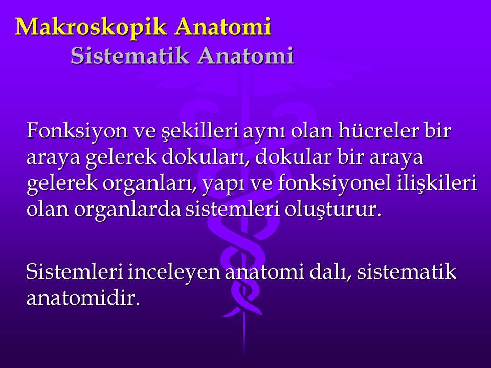 Makroskopik Anatomi Sistematik Anatomi