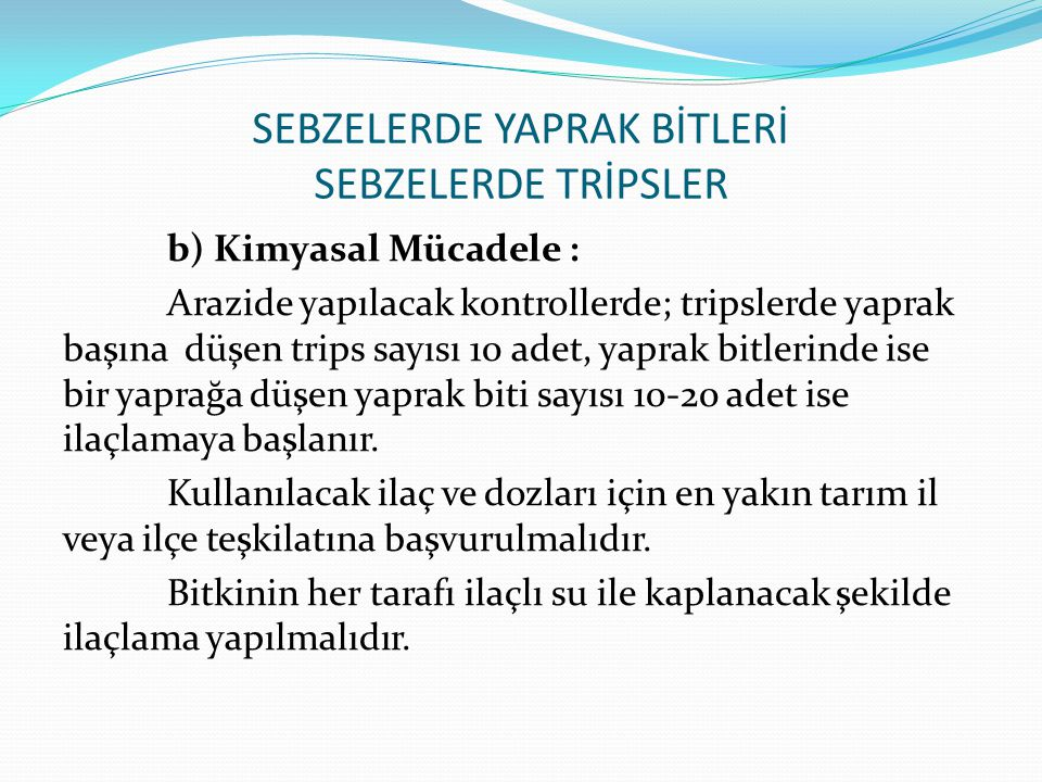 SEBZELERDE YAPRAK BİTLERİ SEBZELERDE TRİPSLER