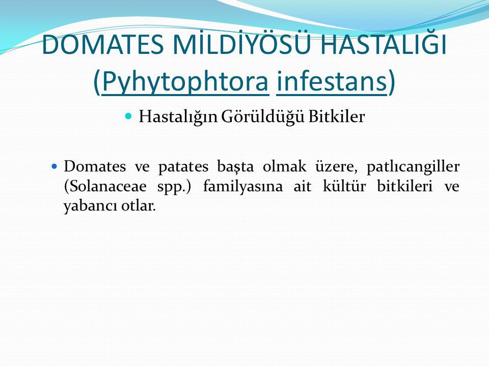 DOMATES MİLDİYÖSÜ HASTALIĞI (Pyhytophtora infestans)