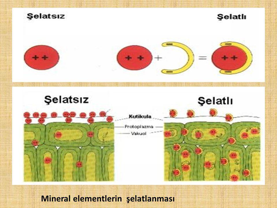 Mineral elementlerin şelatlanması