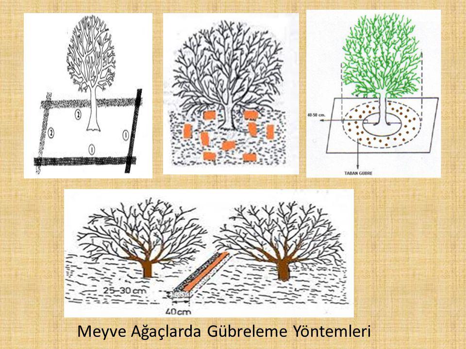 Meyve Ağaçlarda Gübreleme Yöntemleri