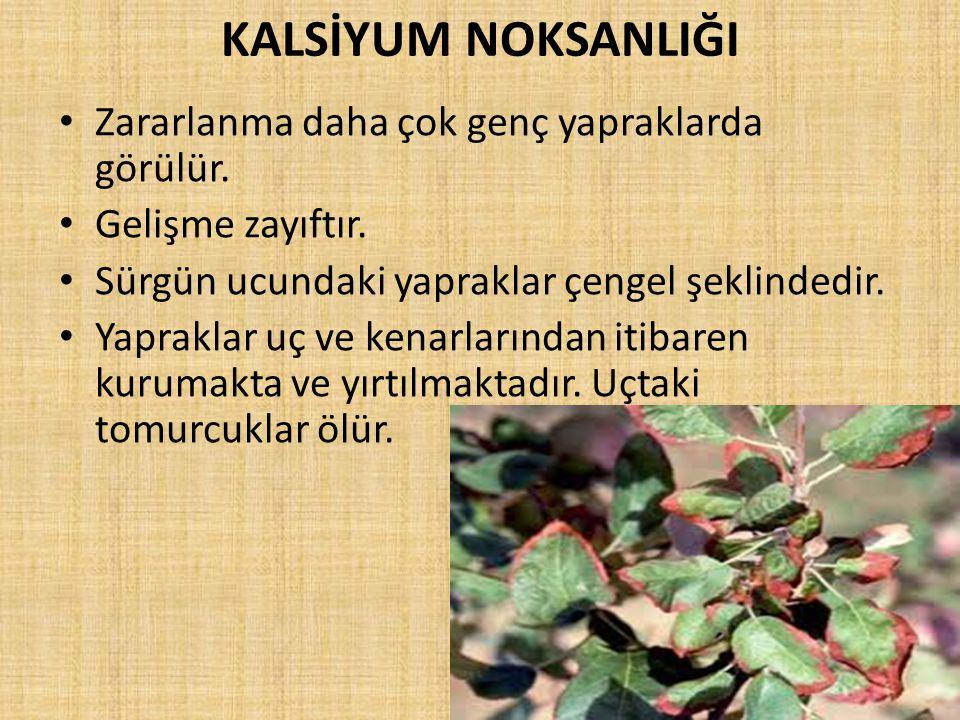KALSİYUM NOKSANLIĞI Zararlanma daha çok genç yapraklarda görülür.