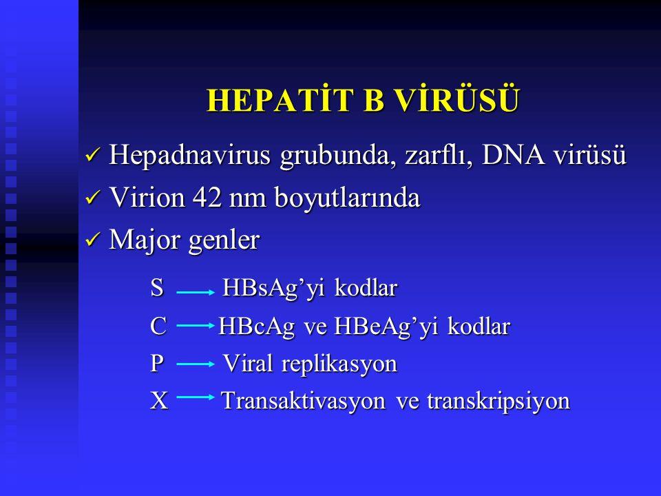 HEPATİT B VİRÜSÜ S HBsAg'yi kodlar