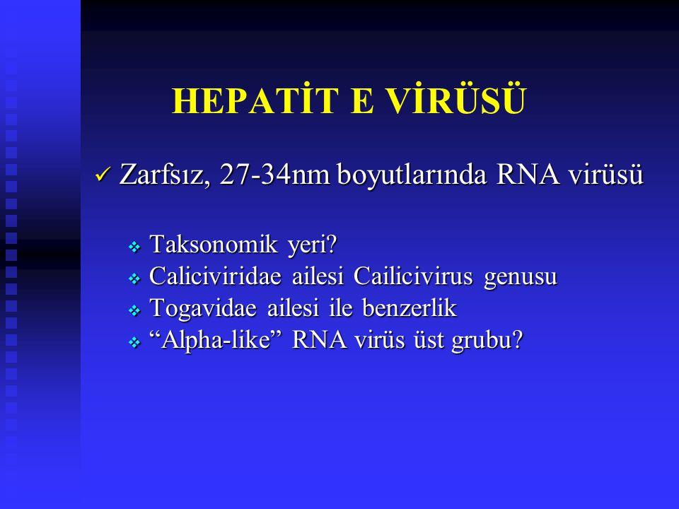 HEPATİT E VİRÜSÜ Zarfsız, 27-34nm boyutlarında RNA virüsü
