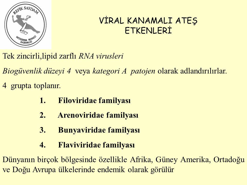 VİRAL KANAMALI ATEŞ ETKENLERİ