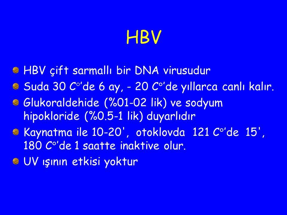 HBV HBV çift sarmallı bir DNA virusudur