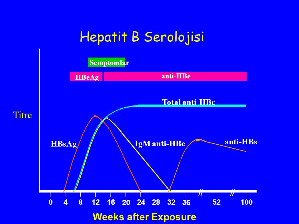 Hepatit B Serolojisi Titre Weeks after Exposure Total anti-HBc