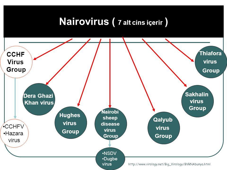 Nairovirus ( 7 alt cins içerir )