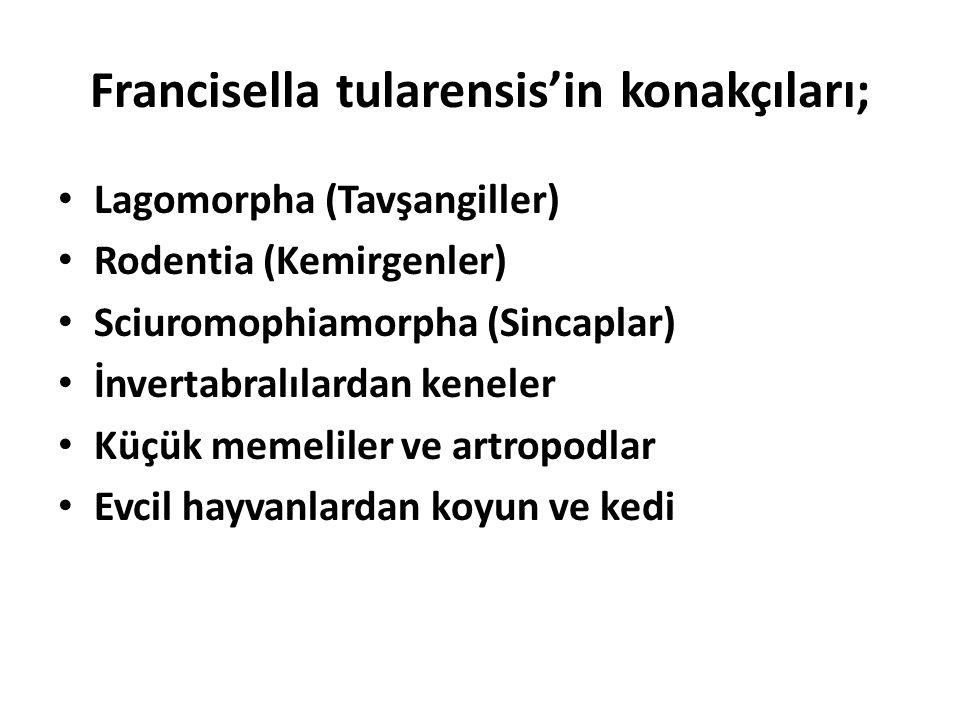 Francisella tularensis'in konakçıları;
