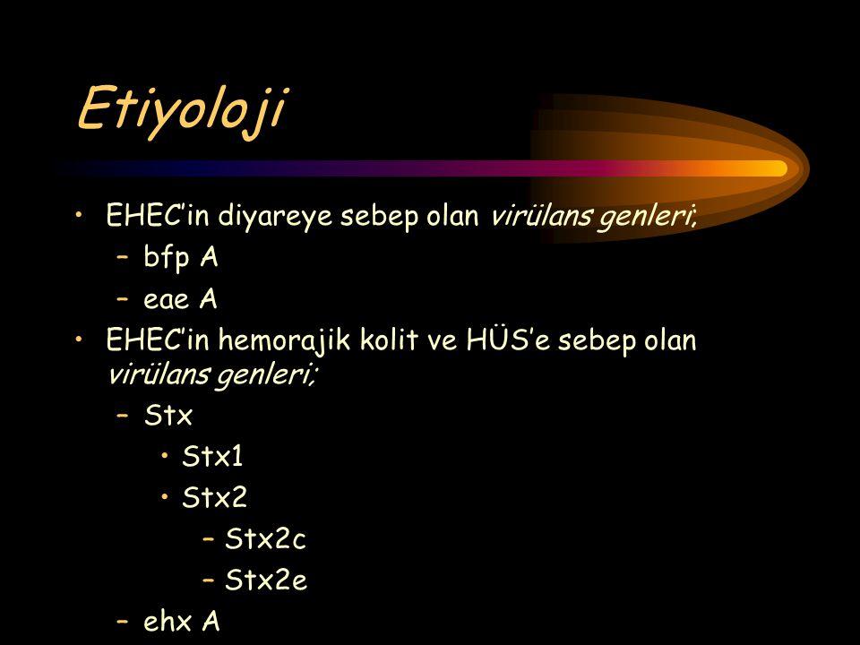 Etiyoloji EHEC'in diyareye sebep olan virülans genleri; bfp A eae A