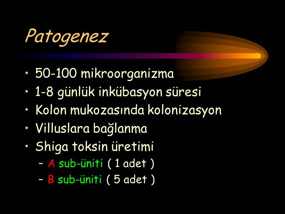 Patogenez 50-100 mikroorganizma 1-8 günlük inkübasyon süresi