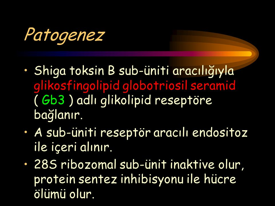Patogenez Shiga toksin B sub-üniti aracılığıyla glikosfingolipid globotriosil seramid ( Gb3 ) adlı glikolipid reseptöre bağlanır.