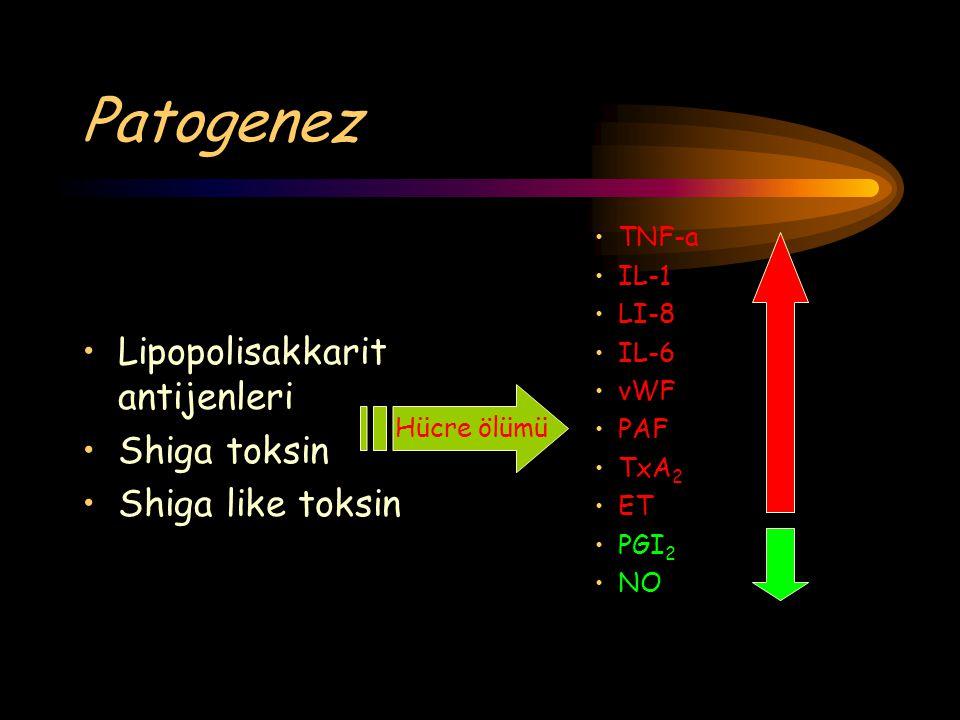 Patogenez Lipopolisakkarit antijenleri Shiga toksin Shiga like toksin