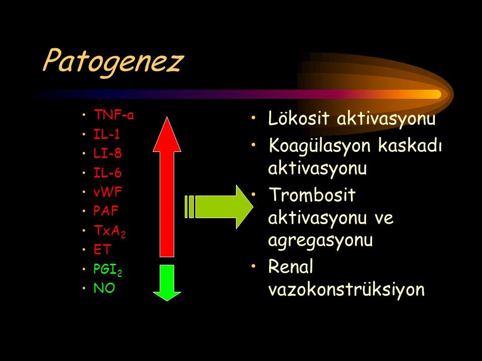 Patogenez Lökosit aktivasyonu Koagülasyon kaskadı aktivasyonu