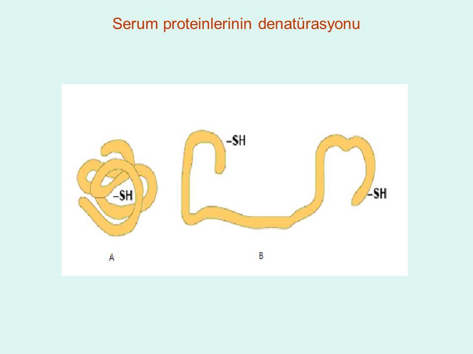 Serum proteinlerinin denatürasyonu