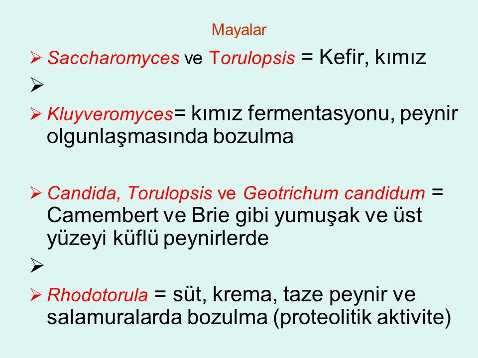 Saccharomyces ve Torulopsis = Kefir, kımız