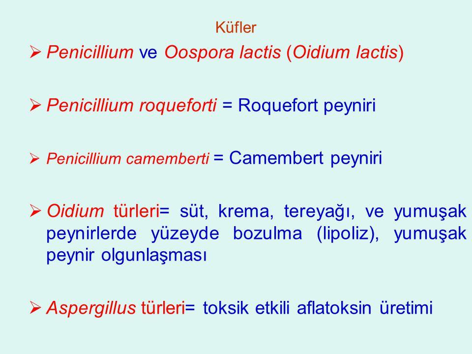 Penicillium ve Oospora lactis (Oidium lactis)