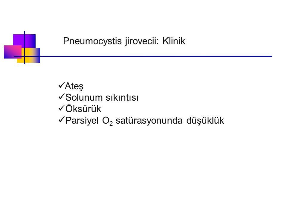 Pneumocystis jirovecii: Klinik