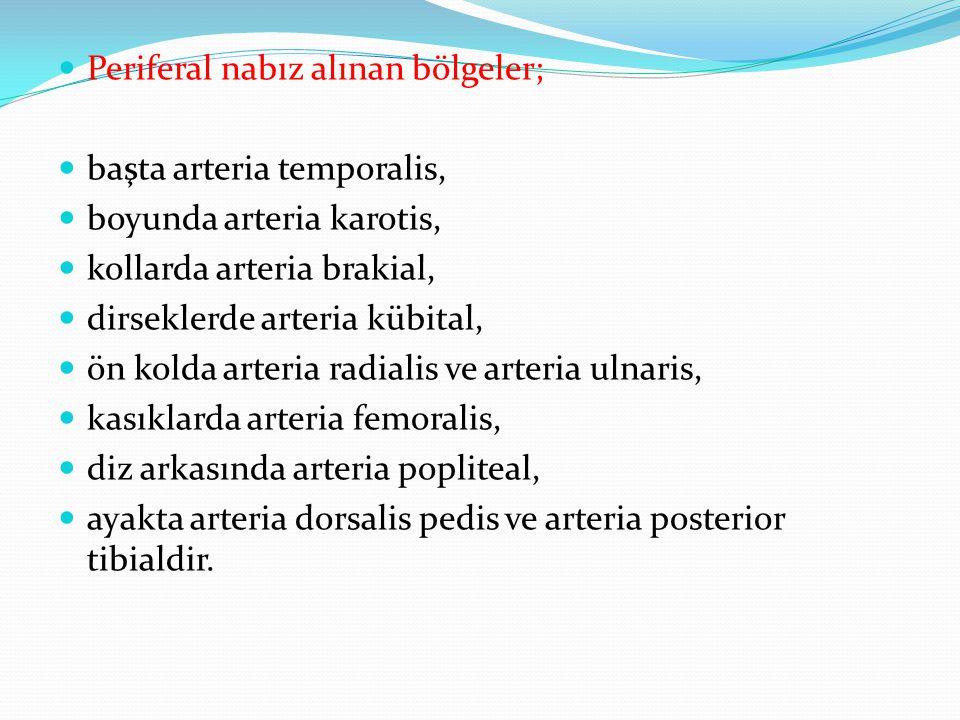 Periferal nabız alınan bölgeler;