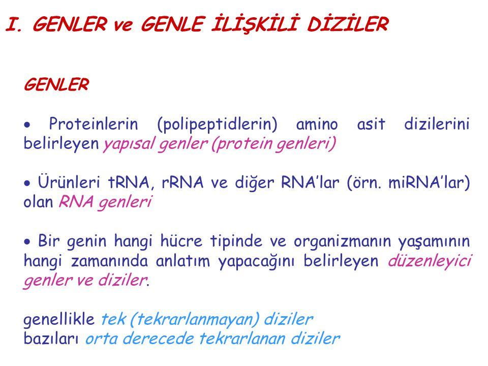 I. GENLER ve GENLE İLİŞKİLİ DİZİLER