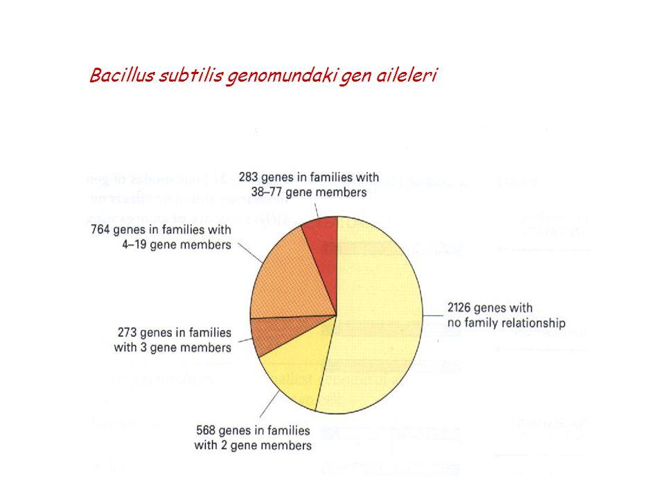 Bacillus subtilis genomundaki gen aileleri