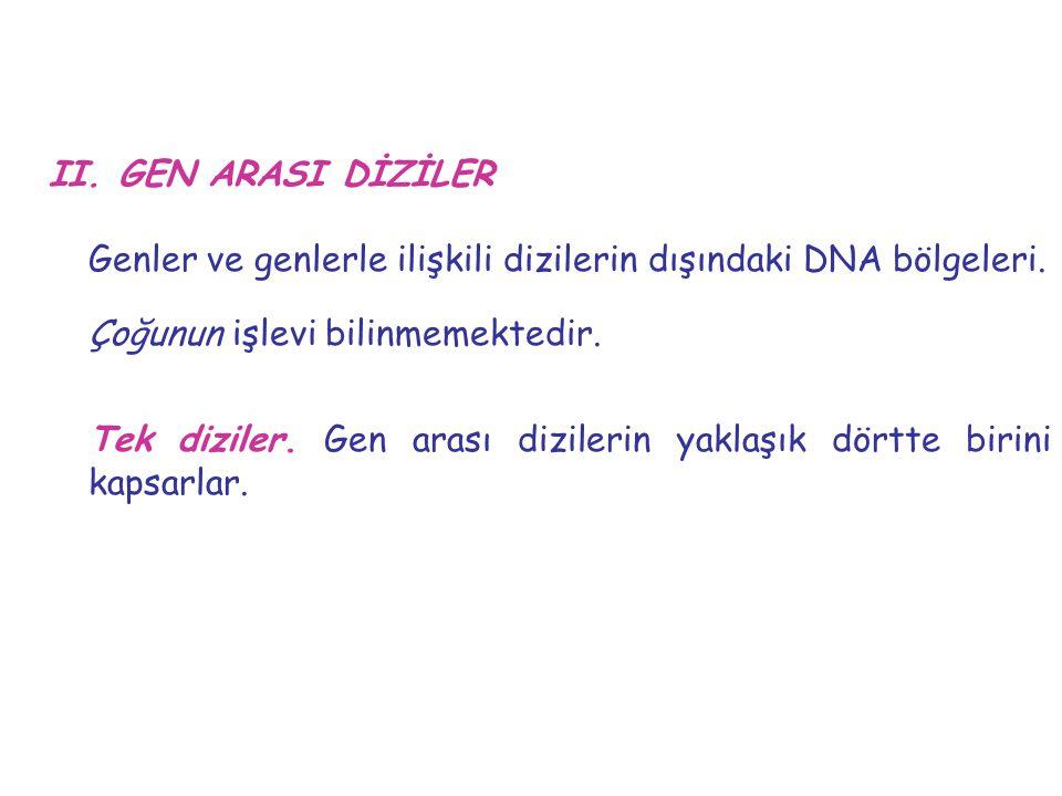 Genler ve genlerle ilişkili dizilerin dışındaki DNA bölgeleri.