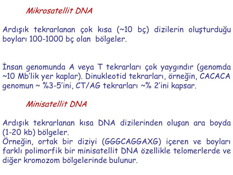 Mikrosatellit DNA Ardışık tekrarlanan çok kısa (~10 bç) dizilerin oluşturduğu boyları 100-1000 bç olan bölgeler.