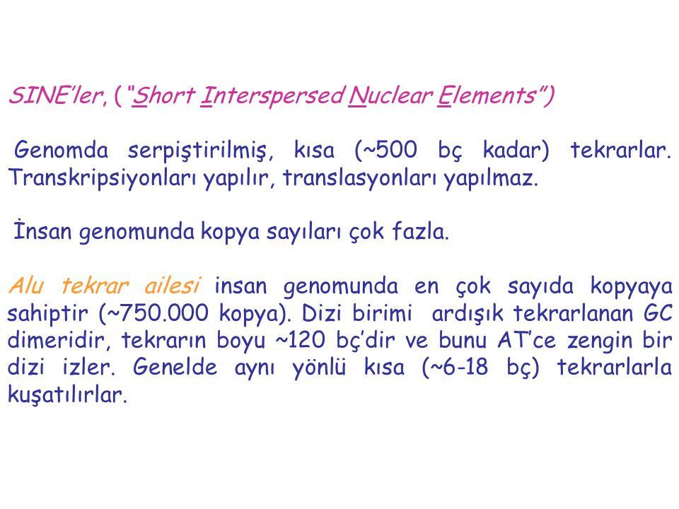 SINE'ler, ( Short Interspersed Nuclear Elements )