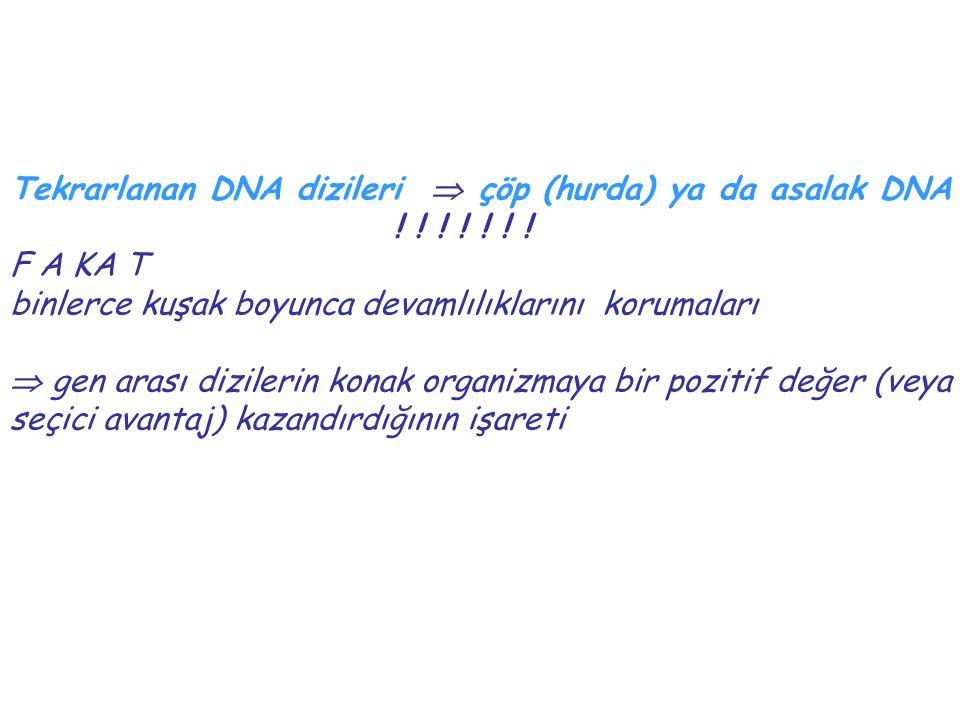 Tekrarlanan DNA dizileri  çöp (hurda) ya da asalak DNA ! ! ! ! ! ! !