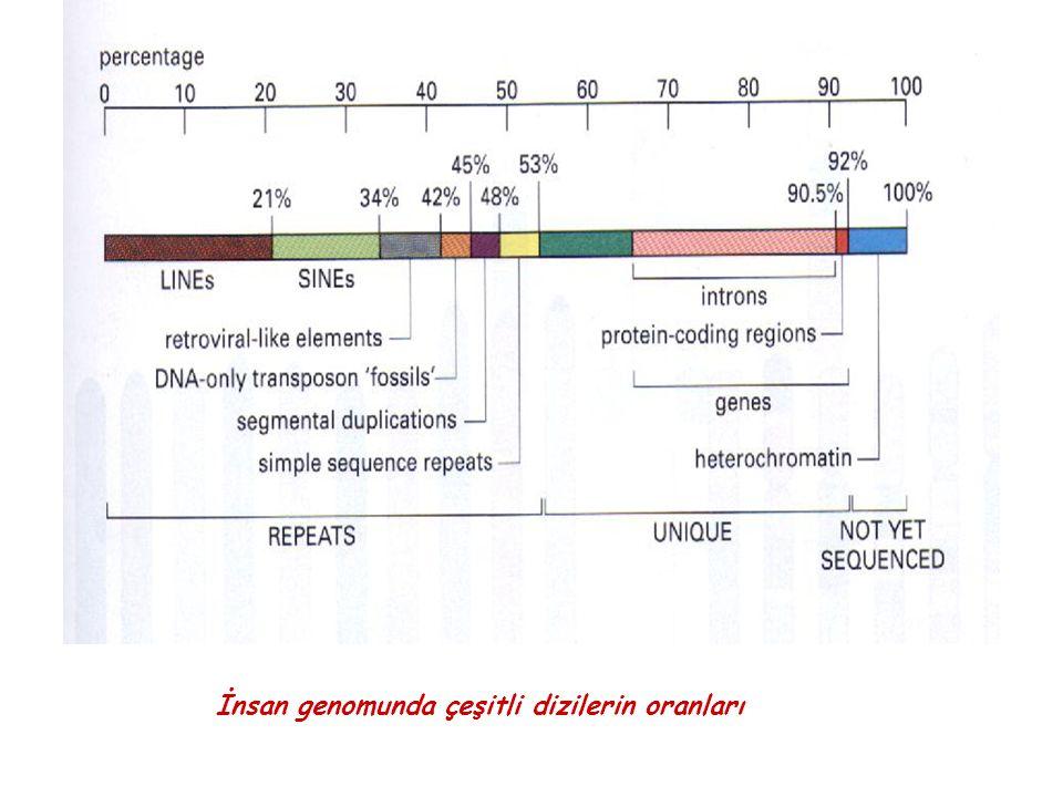 İnsan genomunda çeşitli dizilerin oranları