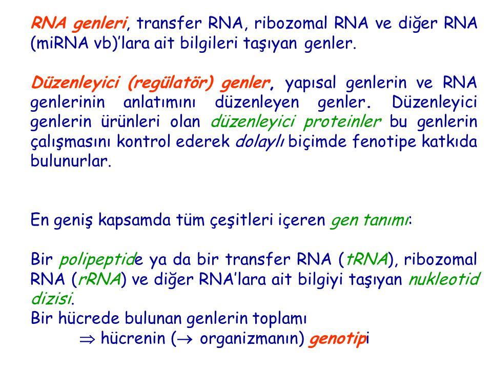 RNA genleri, transfer RNA, ribozomal RNA ve diğer RNA (miRNA vb)'lara ait bilgileri taşıyan genler.
