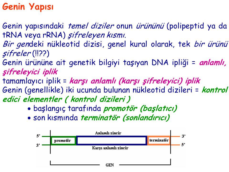 Genin Yapısı Genin yapısındaki temel diziler onun ürününü (polipeptid ya da tRNA veya rRNA) şifreleyen kısmı.