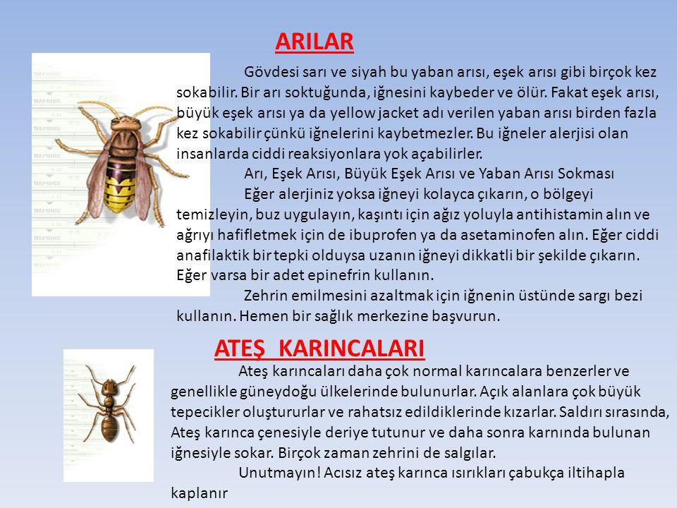 ARILAR ATEŞ KARINCALARI