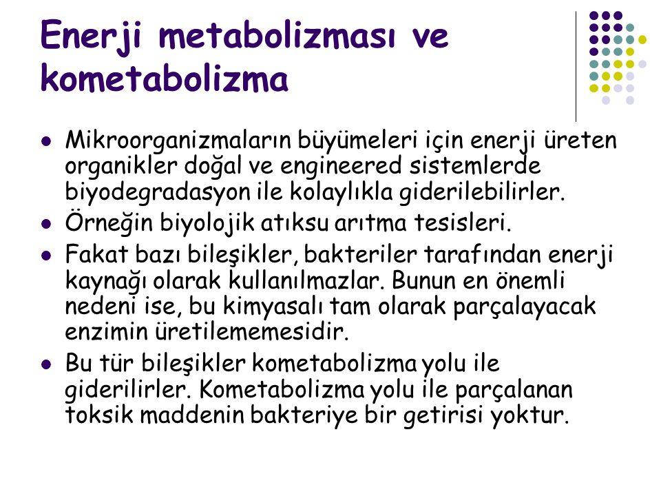 Enerji metabolizması ve kometabolizma
