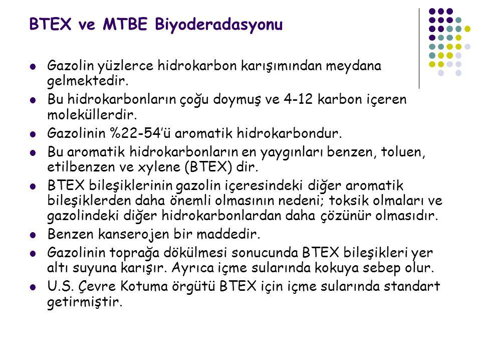 BTEX ve MTBE Biyoderadasyonu