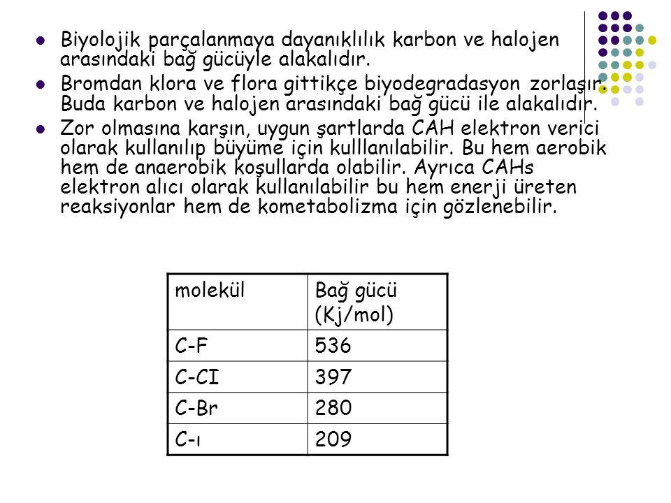 Biyolojik parçalanmaya dayanıklılık karbon ve halojen arasındaki bağ gücüyle alakalıdır.